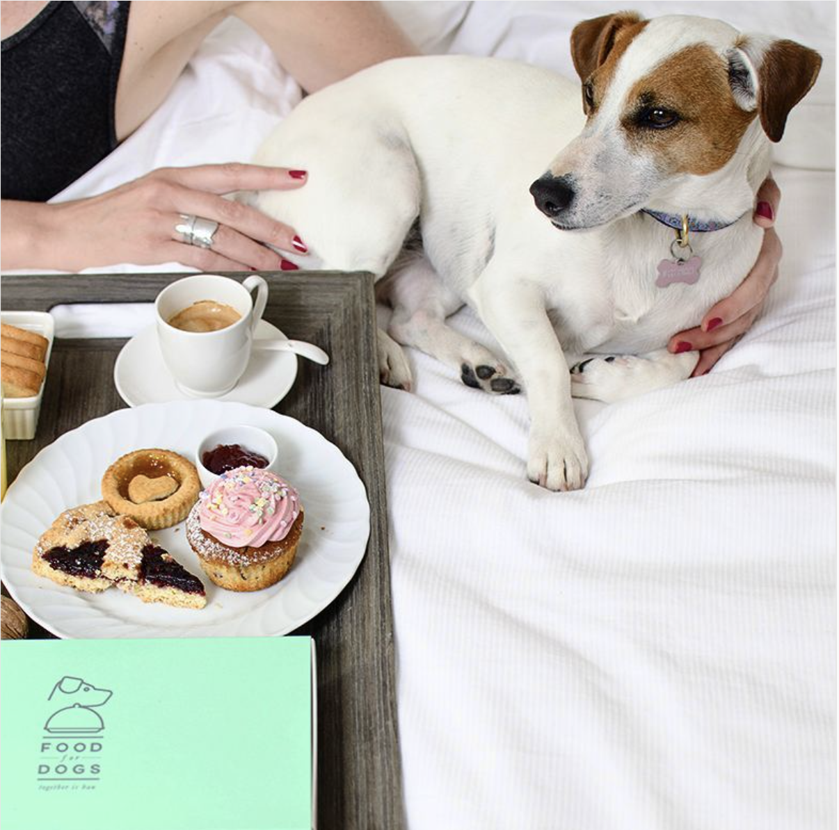 food-for-dogs-hotel2
